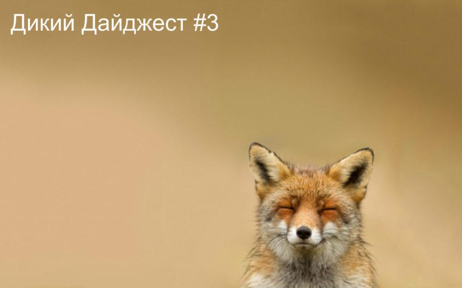 Дикий Дайджест #3