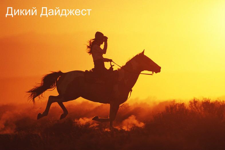 Дикий Дайджест. Соцсети, Яндекс Новости и Play Boy