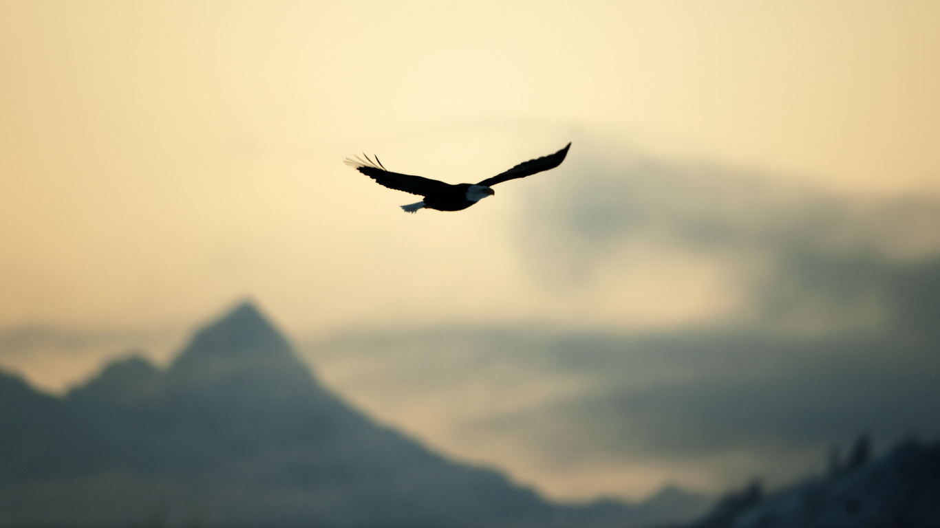 Agile,это свобода