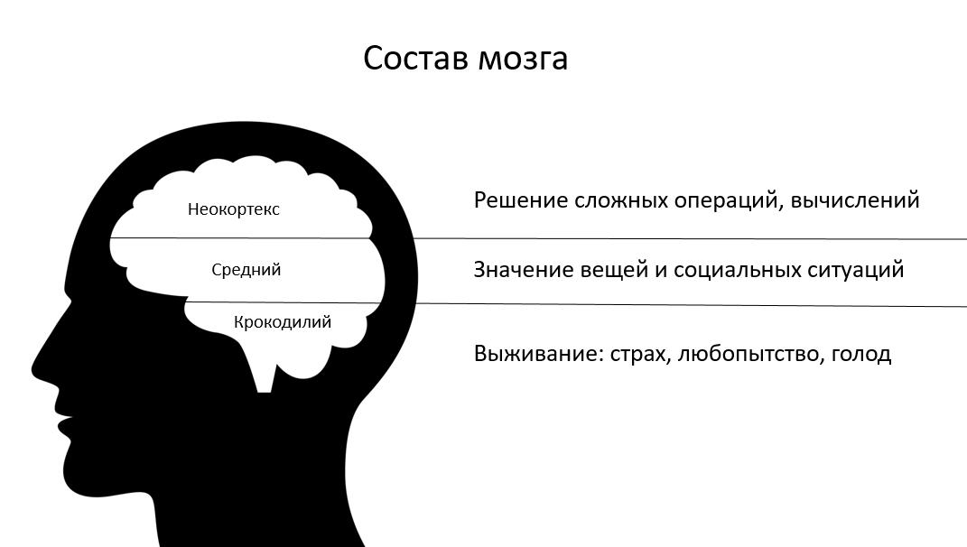 Идеальный питч: состав мозга